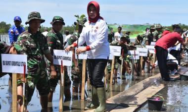 Gerakan Peduli Mangrove Di Canangkan Di Provinsi Gorontalo
